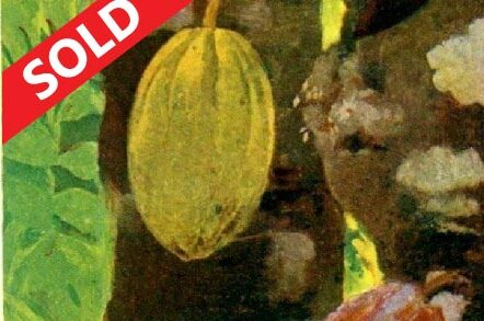 Organic-chocolate-farm-on-Bitcoin-real-estate-11-753x386 copy