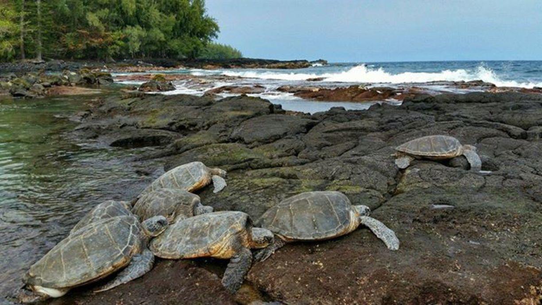 Keaau, Hawaii