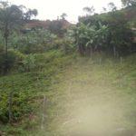 buy farm costa rica with Bitcoin