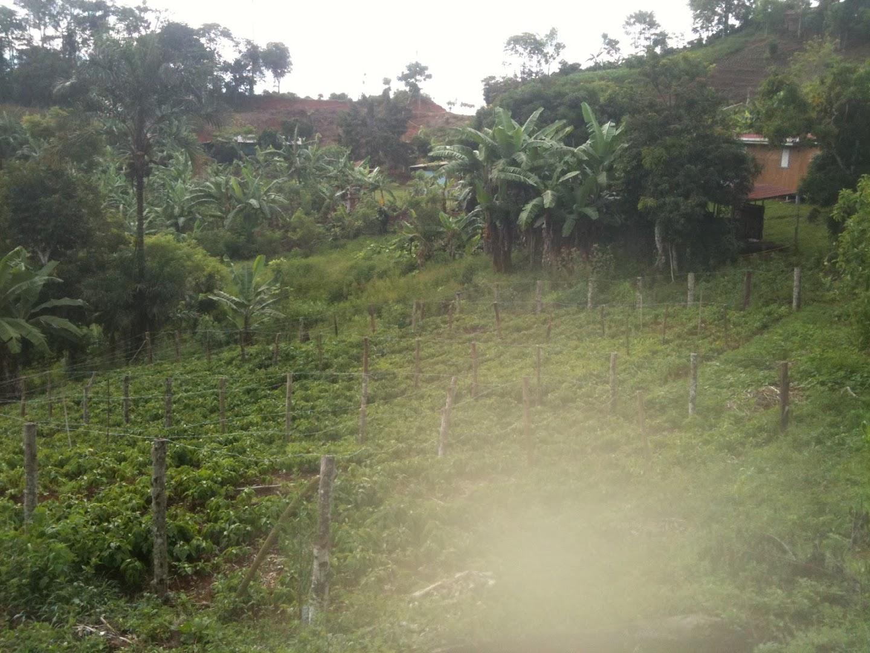 Costa Rica 2.5 acre eco farm 3br house, spring, fruit trees