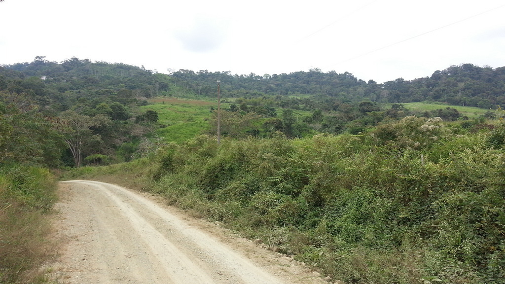 247 Acre Ecuador Farm – Coffee/Fruit/Horses/Cattle – 2 Houses – FANTASTIC LOCATION ONLY 1 HOUR FROM MANTA ECUADOR – Trade for BTC