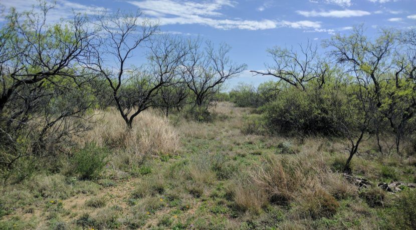 3162 Pronghorn Path Trees_BITCOIN