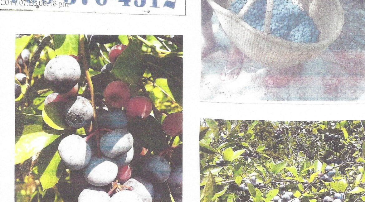 RM15 - 3-ACRES of BLUEBERRIES - Page 15