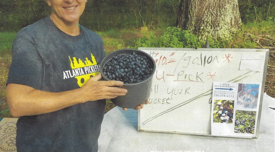 RM16 - BLUEBERRIES FOR SALE U-PICK' EM  - Page 16