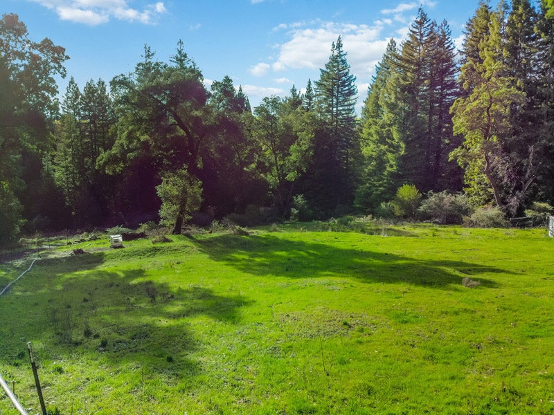 Santa Cruz Redwood Acreage